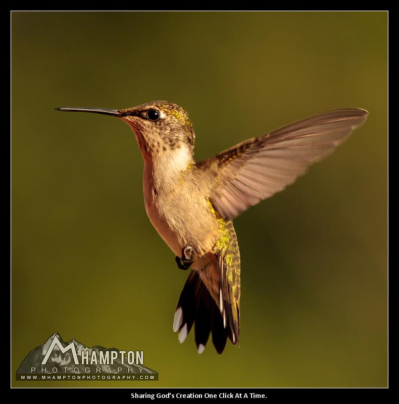 God created the hummingbird
