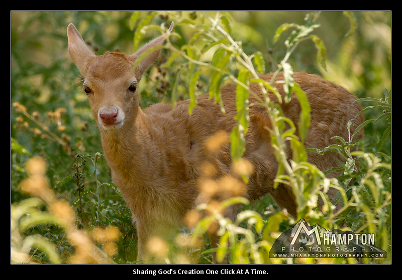 Baby Axis Deer photo