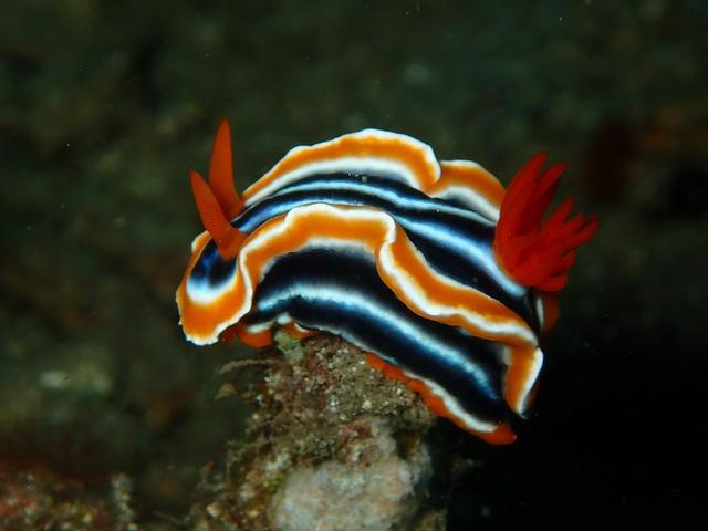 striking Nudibranch